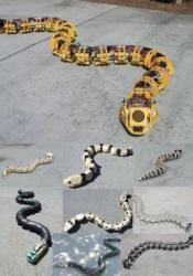 Gavin-Millers-snake-like-robots.jpg