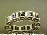polymorphic-robot.jpg